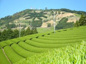 茶文字景観