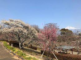 【富士市】 「絶景☆富士山まるごと岩本山」開催中!【美しく品格のある邑】