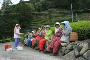 【静岡市】奥長島のだんだん茶畑で新茶摘みをしよう!