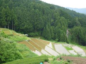 【浜松市】大栗安の棚田で草刈りのお手伝い募集!(美しく品格のある邑)