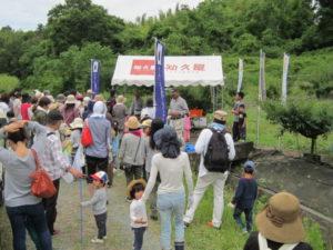 【浜松市】申込締切5/27(金) 先着100名!ホタルの郷アソガ谷で梅の収穫体験しませんか?