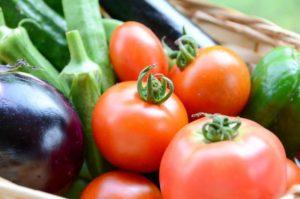 【函南町】7月2日〜 「夏野菜の収穫体験」開催中!!   <ふじのくに美しく品格のある邑「丹那」>