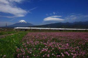 富士山れんげの会 クラウドファンディング挑戦中!