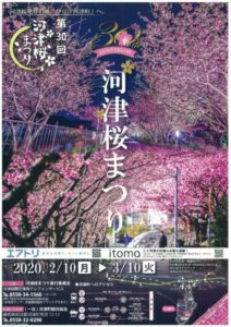 【河津町】2/10-3/10「第30回 河津桜まつり」!!