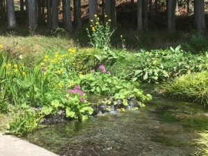 【長泉町】湧水のこと学ぼう♪ワンストップ研修会開催のお知らせ