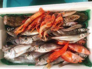 【沼津市】深海魚、直送します!〈ふじのくに美しく品格のある邑「戸田」〉