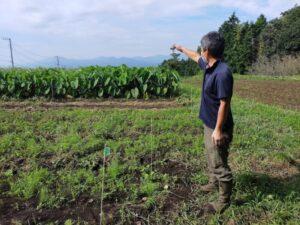 【富士宮市】富士山のブランド野菜「村山人参」成長中♪