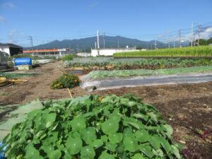 【裾野市】土壌改良して環境を考えています